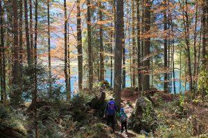 Montagna: i boschi di Fusine